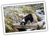 2 dogs on a small bridge